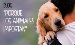 Blog: Porque los animales importan